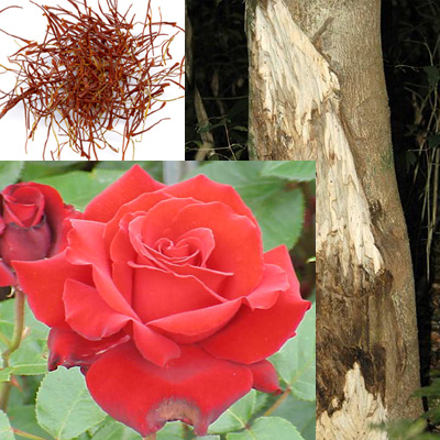 montale roses petals collage